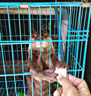 Cara Merawat Otter