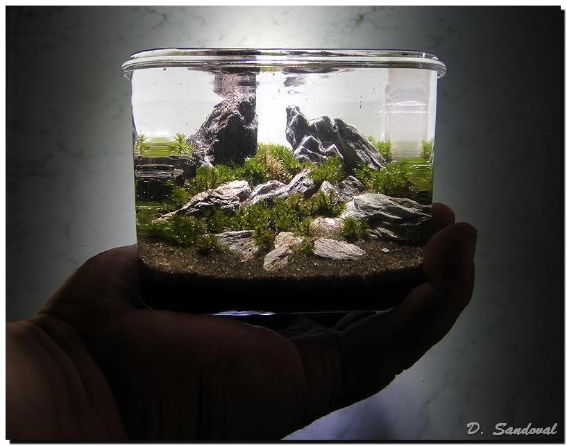 Memory | AquaScaping World Forum