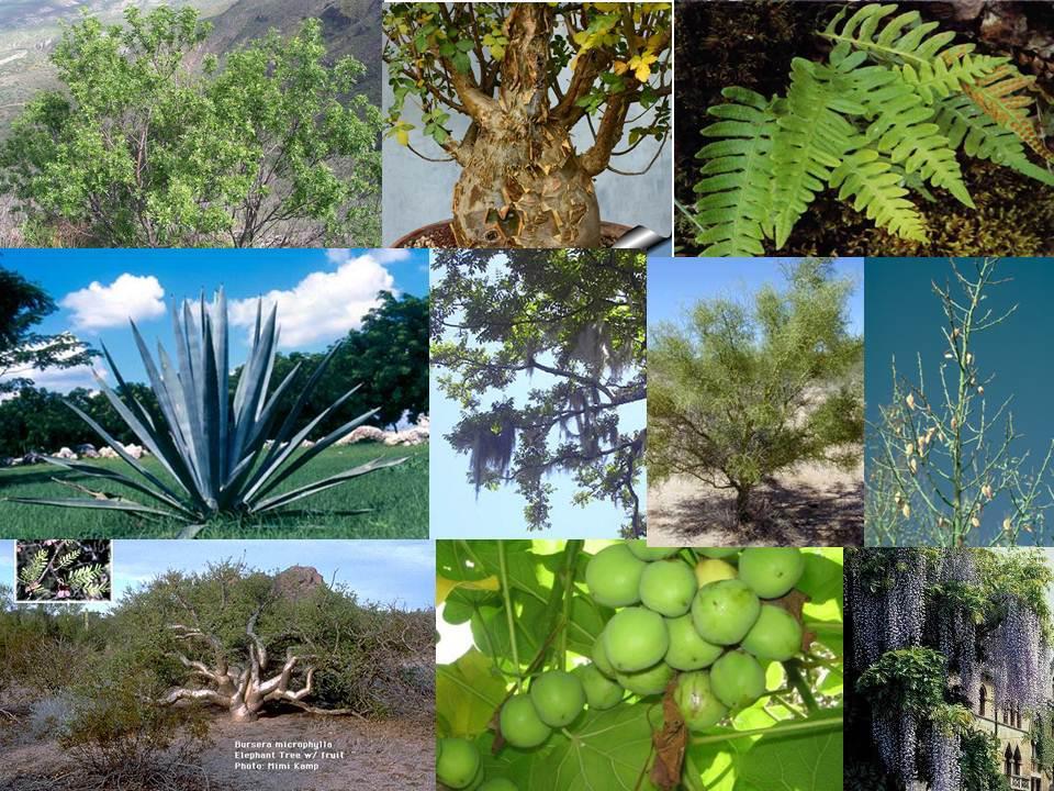 el bosque tropical amazonico o selva baja