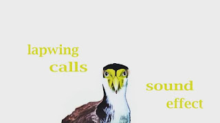 learn bird sounds