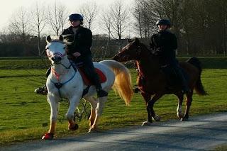 الحصان في المنام ◁ تفسير حلم الحصان الابيض والاسود والبني