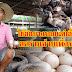 เกษตรกรราชบุรีใช้ล้อยางรถยนต์เลี้ยงเป็ด ลดรายจ่ายเพิ่งรายได้