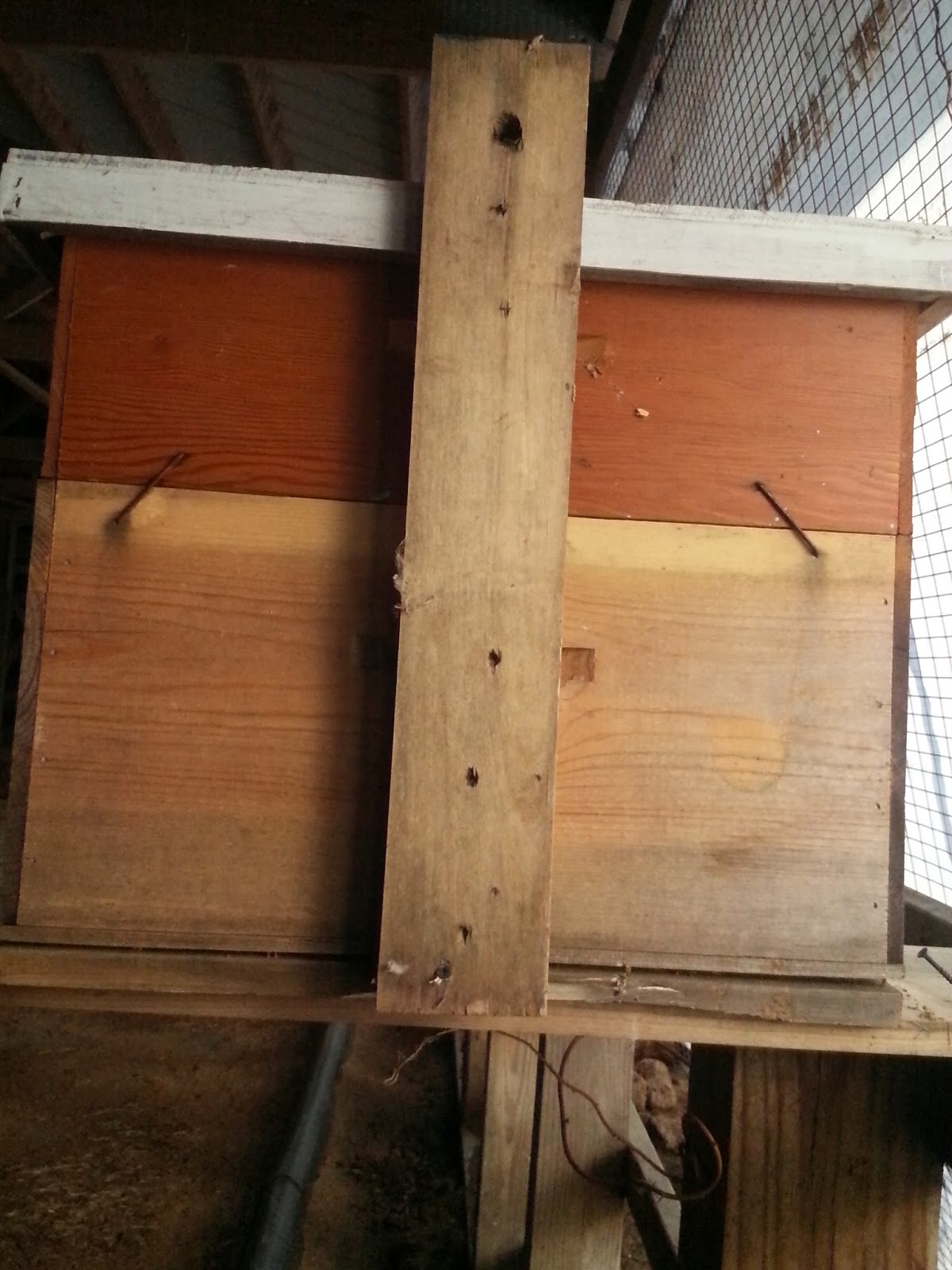 Our Bee Blog Swarm Traps By Beekeeper Jack