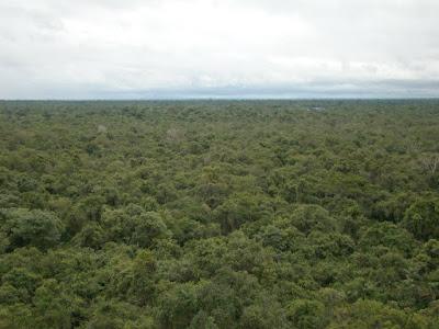 Dia da árvore, 21 de novembro, datas comemorativas meio ambiente, meio ambiente, natureza, árvore, Tocantins, seminário
