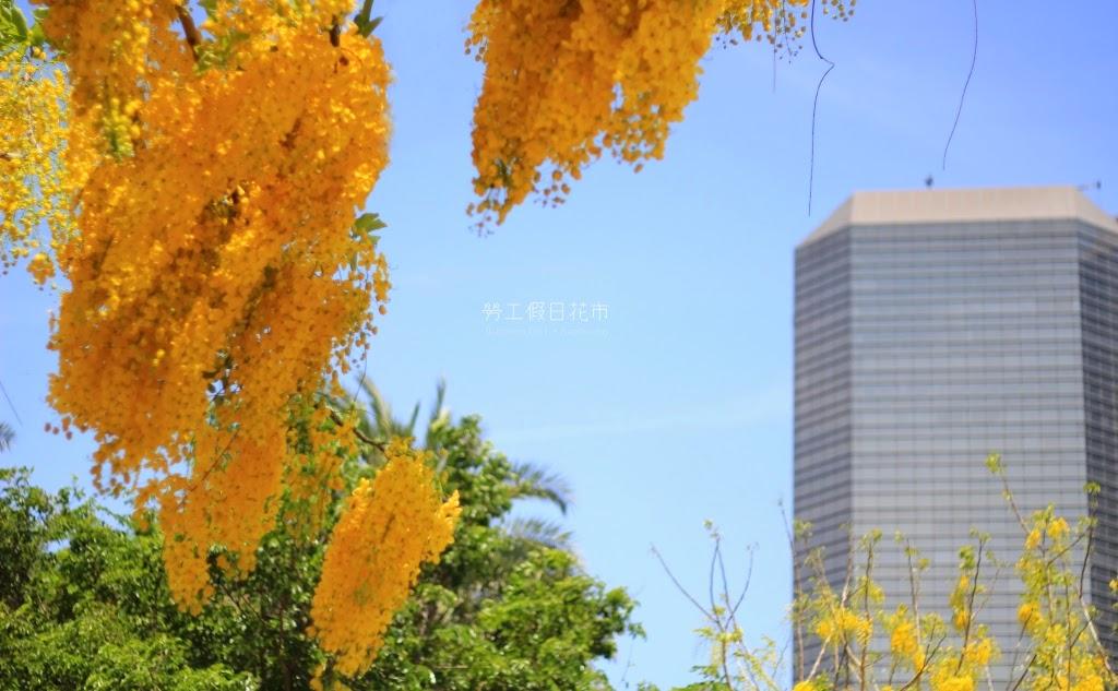 高雄前鎮景點,勞工公園假日花市-32