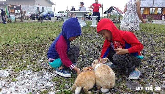 Melawat Rabbit Land Singgah Bayu, Jalan Kimanis Keningau