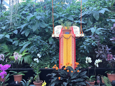 Small green plant with small leaves on an orange and red swing seat throne