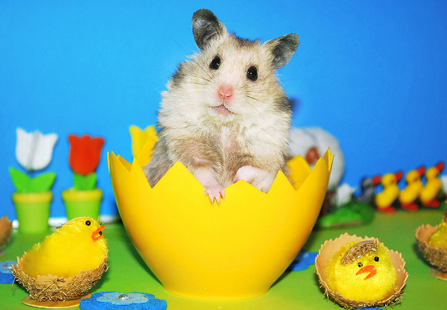 Unexpectedly Funny Things to do with Hamsters When You're