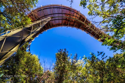 Puente de madera en  el parque botanico Kirstenbosch
