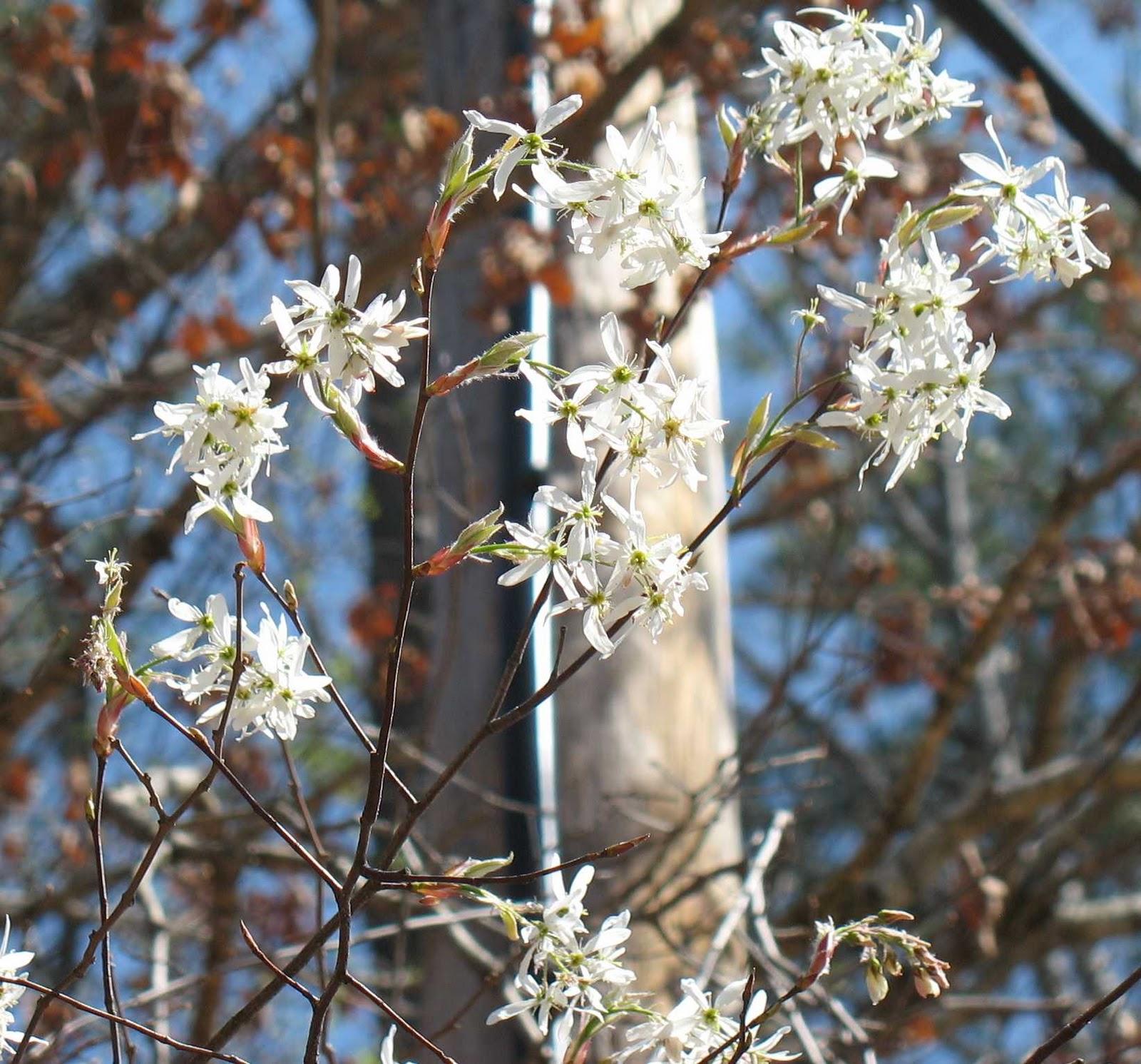 Using Georgia Native Plants April 2011