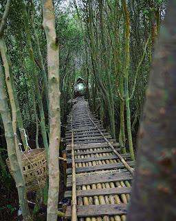 Hutan Mangrove jogja, hutan mangrove wana tirta, tiket masuk hutan mangrove kulon progo
