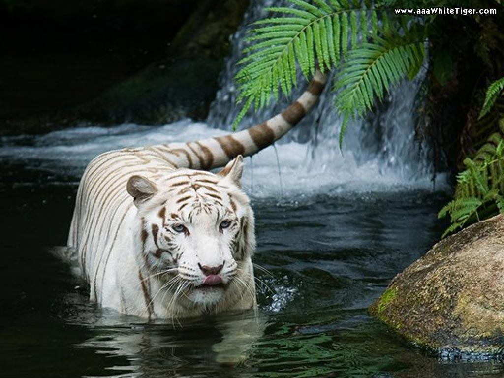 Animal Photo 2012