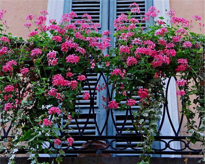 Single Floor Small House Elevation : Beautiful balcony gardens kerala home design and floor plans