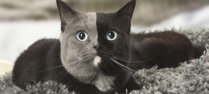 Σπάνιο γατάκι με «δύο πρόσωπα» είναι απλά πανέμορφο (Φώτο)