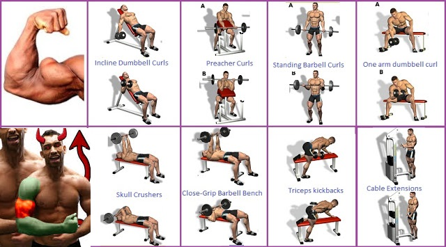 top six exercises to boost bicep mass