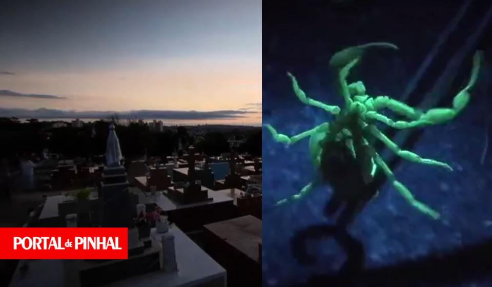 Câmera Record vai exibir reportagem sobre os escorpiões em Espírito Santo do Pinhal