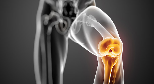 The Basic Science of Human Knee Menisci Structure, Composition, and Function | El Paso, TX Chiropractor