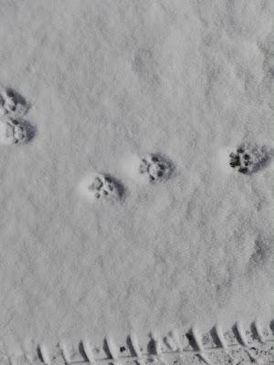 orto-di-febbraio-neve