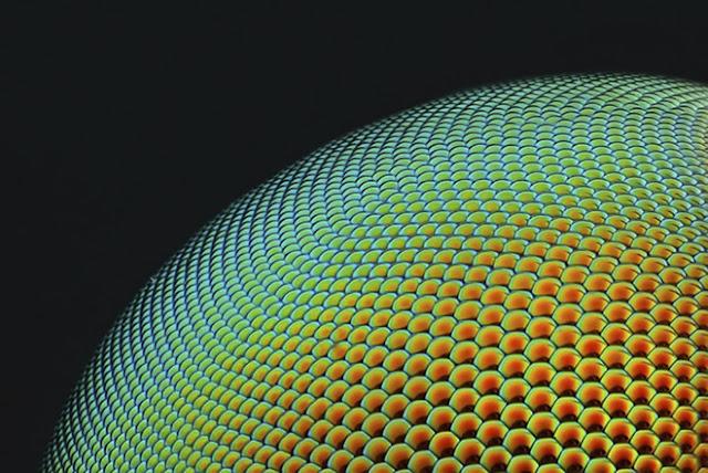 Mắt của một con ruồi ăn sâu (rubber-fly), tác phẩm đến từ Abu Dhabi, đạt giải Khuyến khích