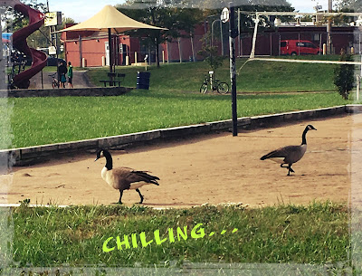 Chilling at the park: 2 geese, kids at playground, a bicycle