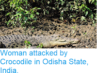 https://sciencythoughts.blogspot.com/2018/10/woman-attacked-by-crocodile-in-odisha.html