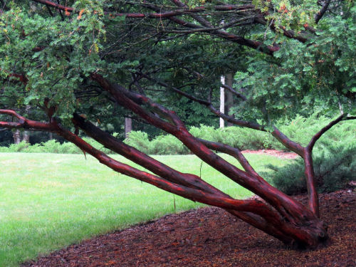interesting branches at Dow Gardens