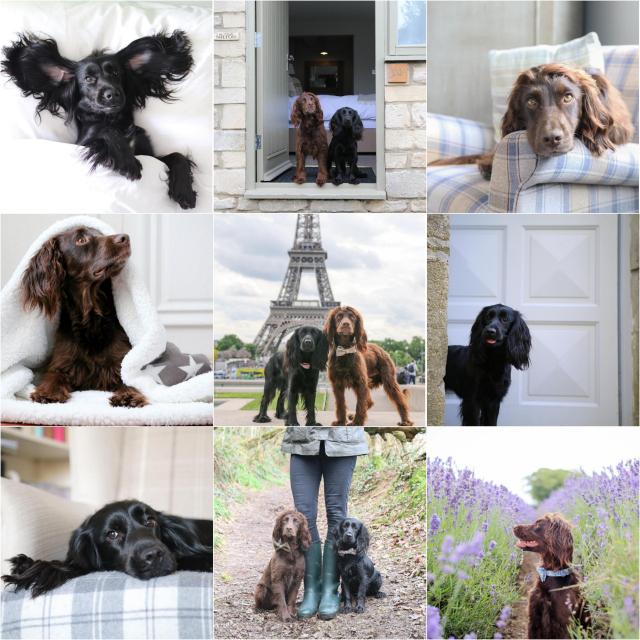 How to run a successful dog instagram account
