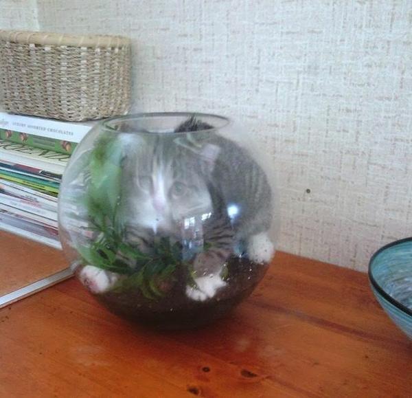 Смешной котенок в аквариуме