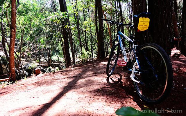 Menyandarkan sepeda di pohon pinus