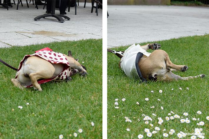 Hunde Hochzeitsgäste
