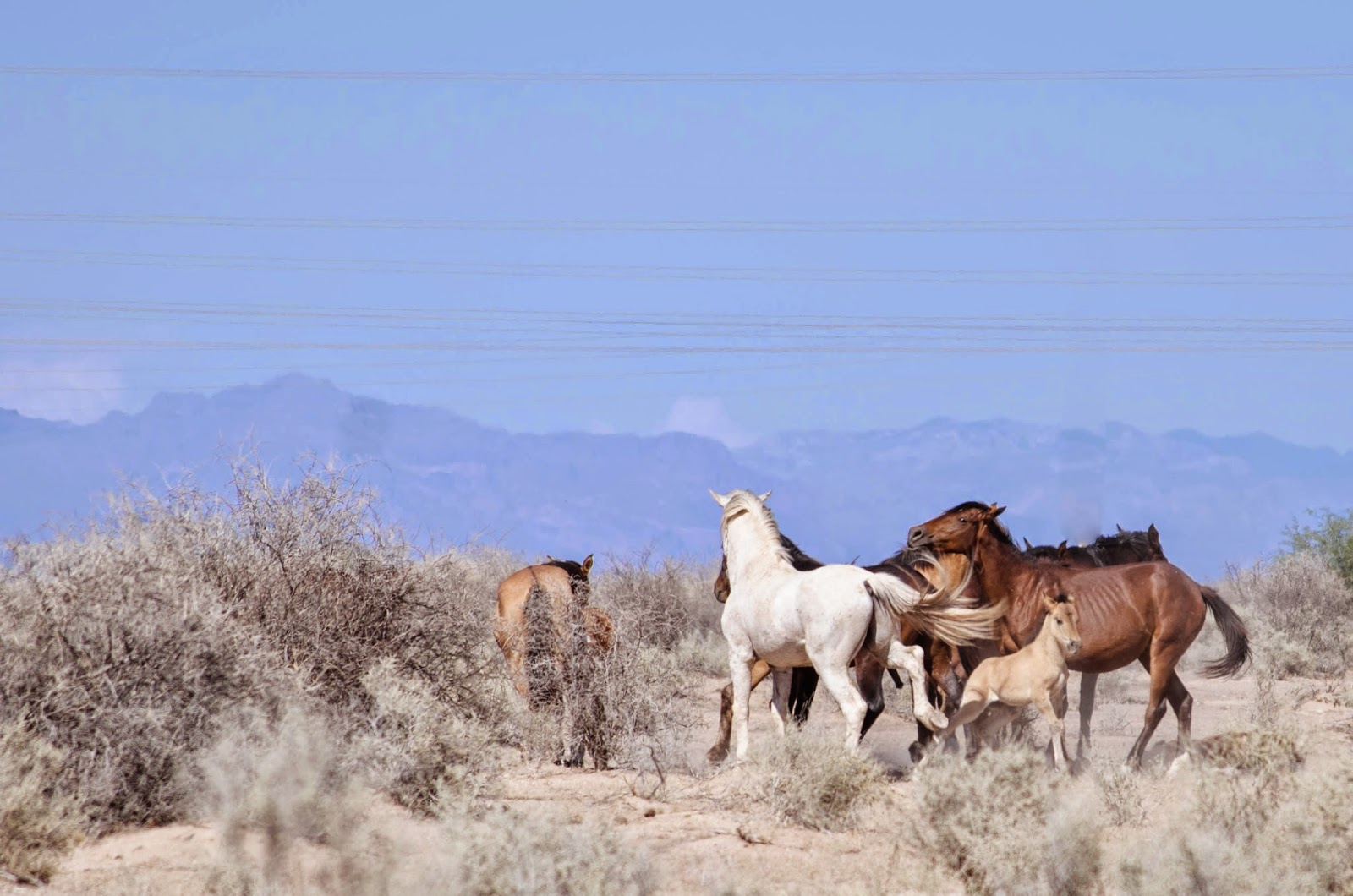 Arizona Indian reservation wild horses