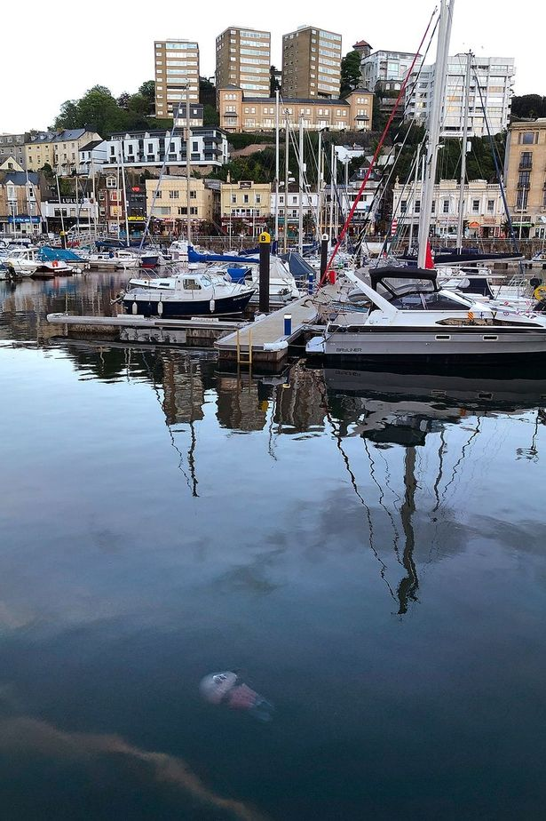 Torquay Harbour, where the jellyfish were spotted in shallow waters