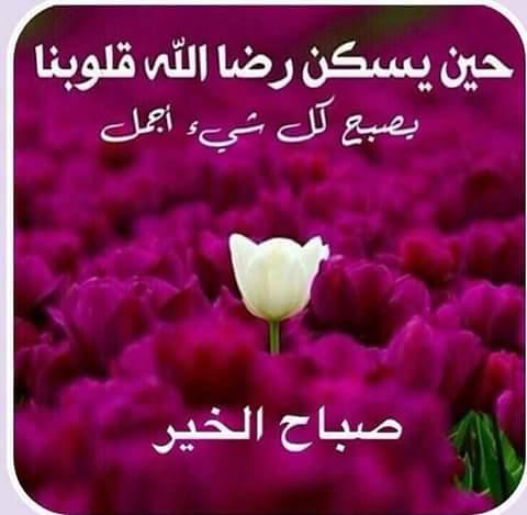 بالصور بوستات عن الصباح , اجمل الصور مع احلى صباح photos morning sabah al khair 12