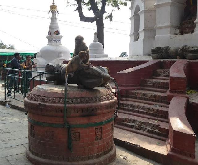 scimmie al tempio delle scimmie
