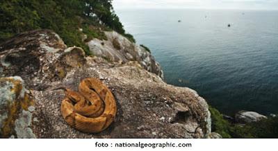 Fakta Mengejutkan Tentang Pulau Ular