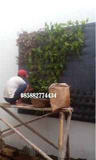 Harga pembuatan taman dinding