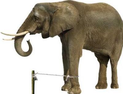 poveste elefant