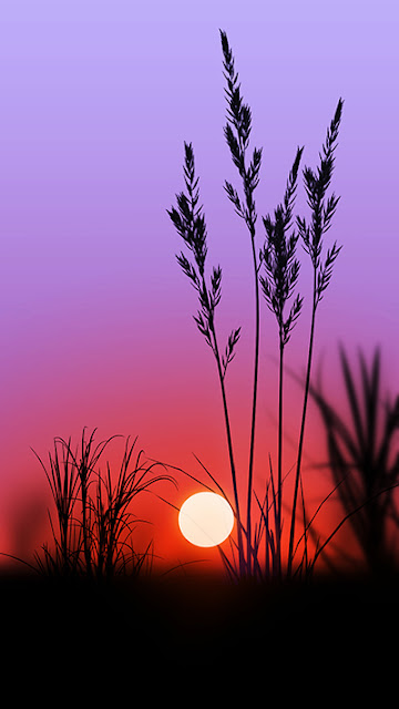 Sunset Wallpaper ZenFone 3