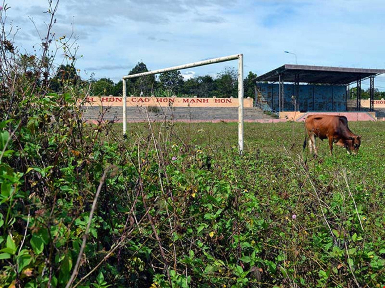 Gia Lai: Sân vận động tiền tỉ dành để… thả bò
