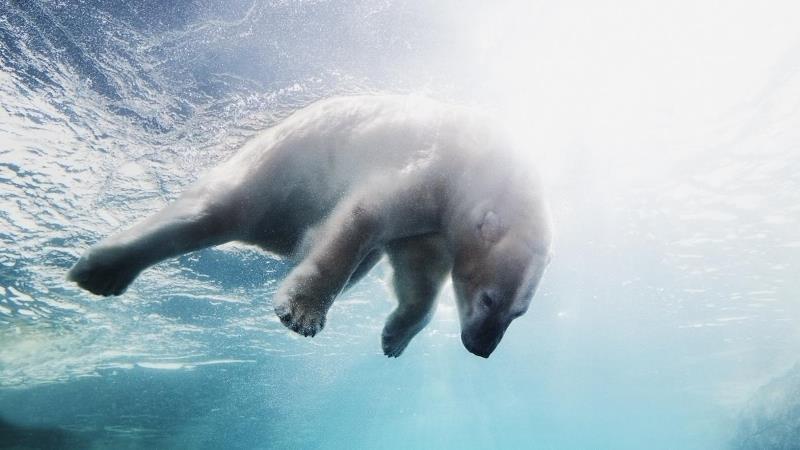 tundra biome animals
