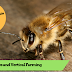 Episode 14 - Bee Apocalypse and Vertical Farming