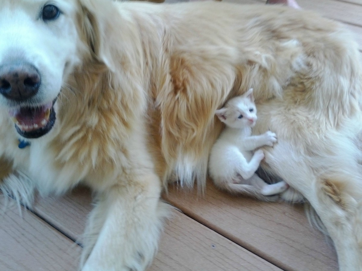 Cats And Dogs Get Along 35 Pics