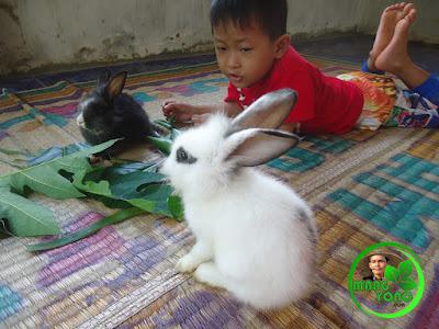 "Anak admin Gigin"" kasih makan Anak Kelinci dengan daun Pepaya"