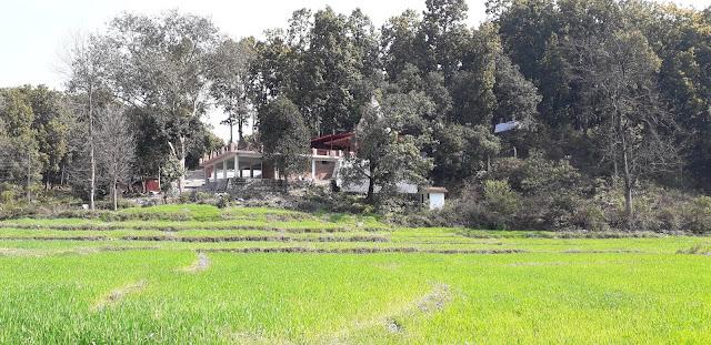 Madu Siddh Temple Dehradun photos