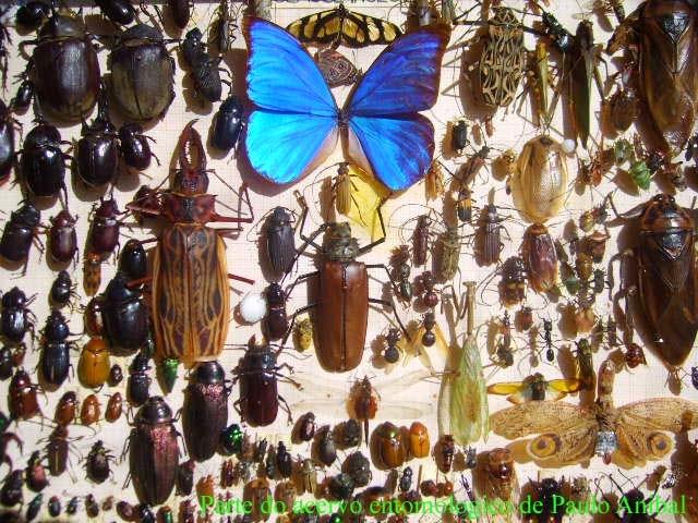 borboletas-lepidópteros
