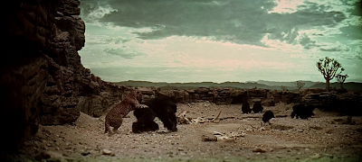 A leopard attacks a herbivorous hominid, 2001: A Space Odyssey (1968), directed by Stanley Kubrick