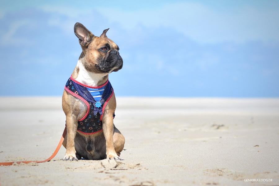 Hundbelog Urlaub Hund Texel Holland Niederlande Strand Meer Leuchtturm