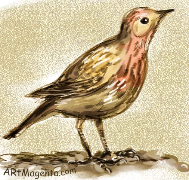 Red-throated Pipit is a bird drawing by artist and illustrator Artmagenta