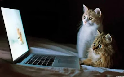 Film-film Tentang Kucing Ini Pas Ditonton Buat Catlover