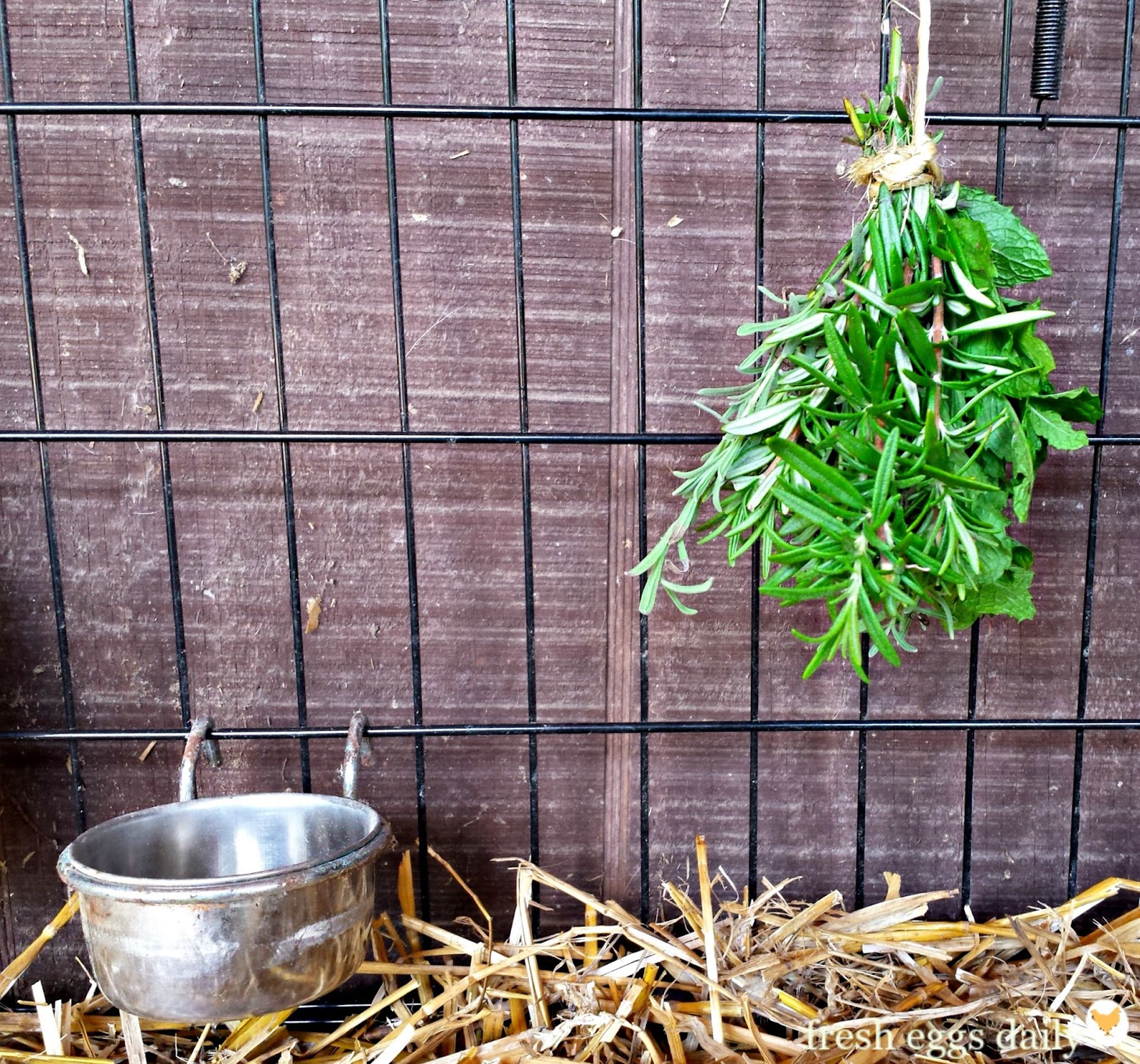 Can Lemon Balm Herbs Be Used On Dogs Eat